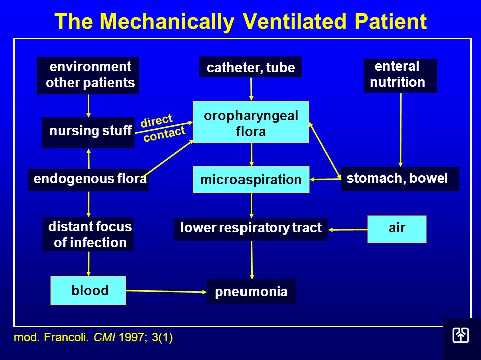 The Mechanically Ventilated Patient