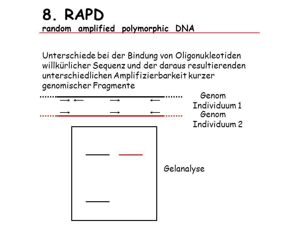 8. RAPD random amplified polymorphic DNA