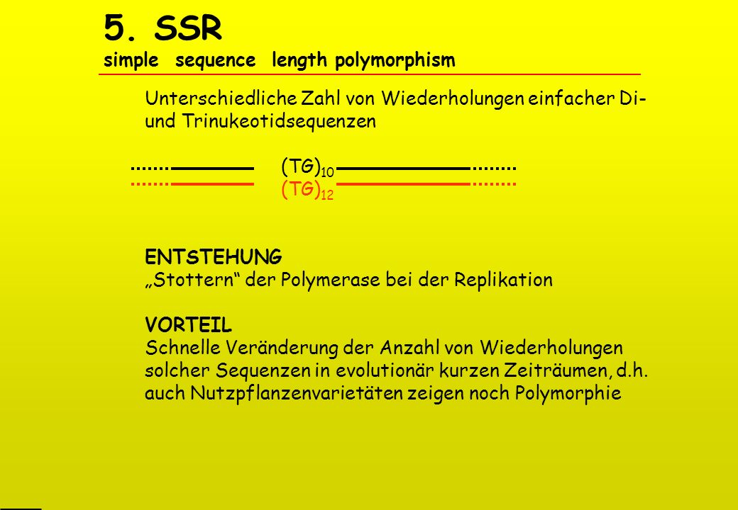 5. SSR simple sequence length polymorphism