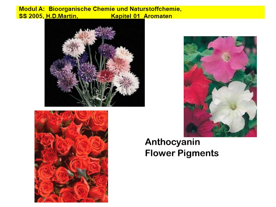 Anthocyanin Flower Pigments