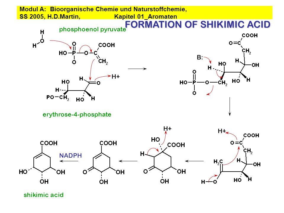 FORMATION OF SHIKIMIC ACID