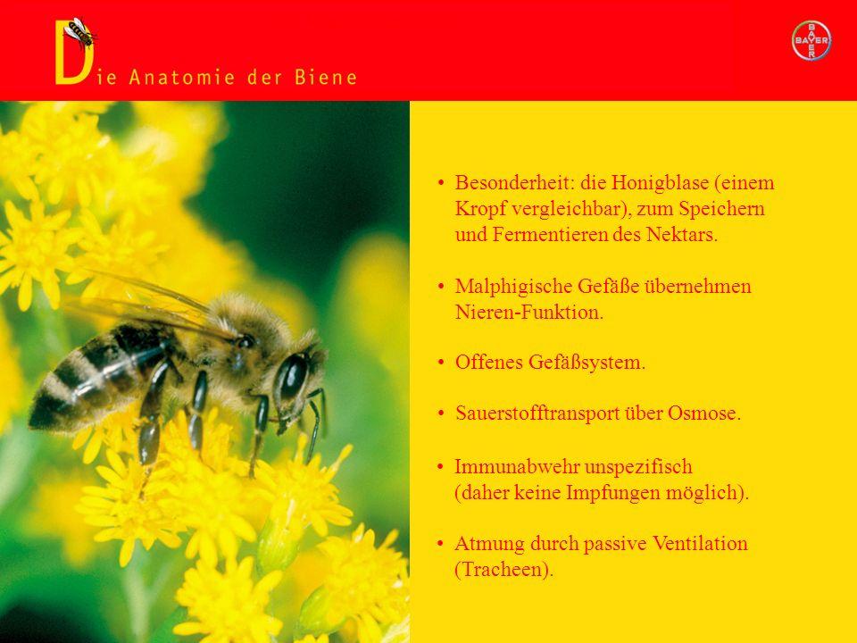 Titel Kleine Bienenkunde. - ppt herunterladen