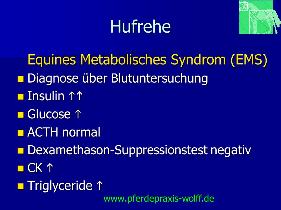 Equines Metabolisches Syndrom (EMS)