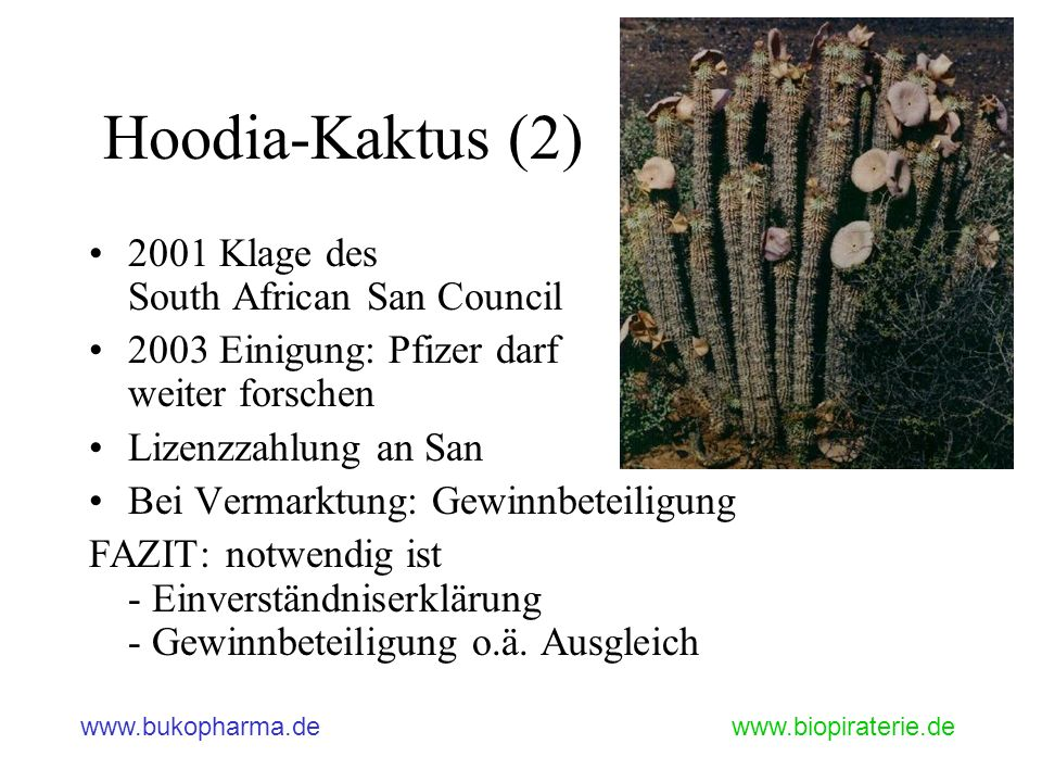 Hoodia-Kaktus (2) 2001 Klage des South African San Council