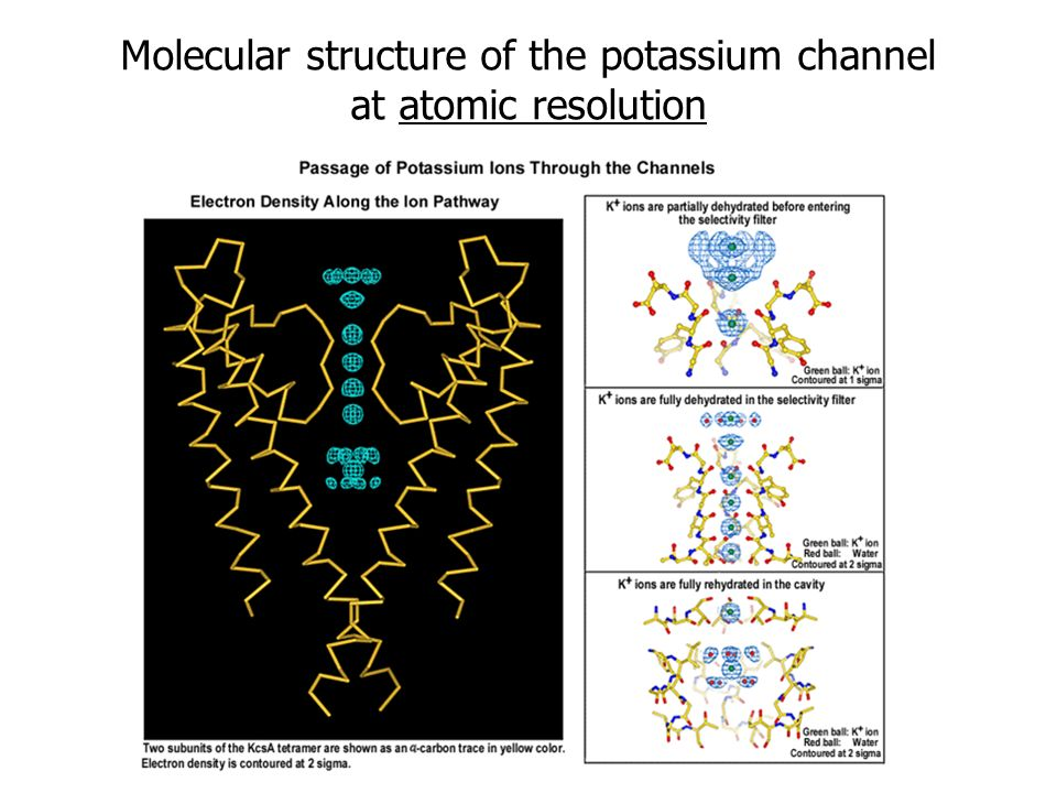 Molecular structure of the potassium channel at atomic resolution