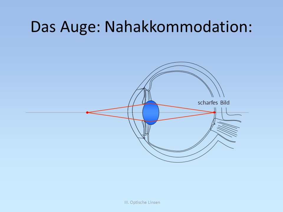 Das Auge: Nahakkommodation: