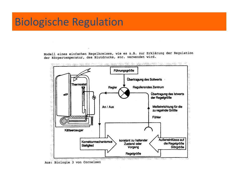 Biologische Regulation