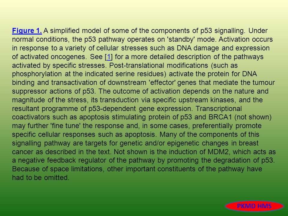 Figure 1. A simplified model of some of the components of p53 signalling. Under normal conditions, the p53 pathway operates on standby mode. Activation occurs in response to a variety of cellular stresses such as DNA damage and expression of activated oncogenes. See [1] for a more detailed description of the pathways activated by specific stresses. Post-translational modifications (such as phosphorylation at the indicated serine residues) activate the protein for DNA binding and transactivation of downstream effector genes that mediate the tumour suppressor actions of p53. The outcome of activation depends on the nature and magnitude of the stress, its transduction via specific upstream kinases, and the resultant programme of p53-dependent gene expression. Transcriptional coactivators such as apoptosis stimulating protein of p53 and BRCA1 (not shown) may further fine tune the response and, in some cases, preferentially promote specific cellular responses such as apoptosis. Many of the components of this signalling pathway are targets for genetic and/or epigenetic changes in breast cancer as described in the text. Not shown is the induction of MDM2, which acts as a negative feedback regulator of the pathway by promoting the degradation of p53. Because of space limitations, other important constituents of the pathway have had to be omitted.