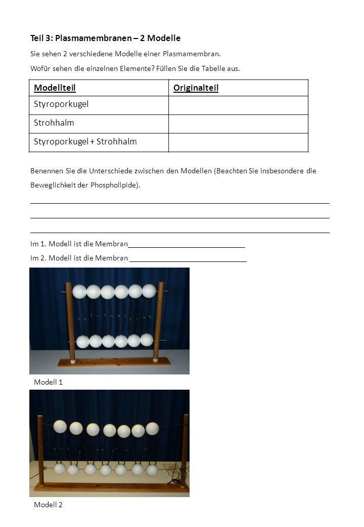 Beste Mathe Arbeitsblatt Für Klasse 8 Cbse Mit Antworten Bilder ...