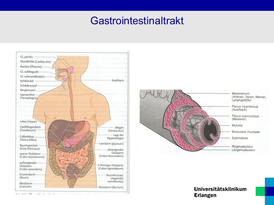 Gastrointestinaltrakt - ppt herunterladen