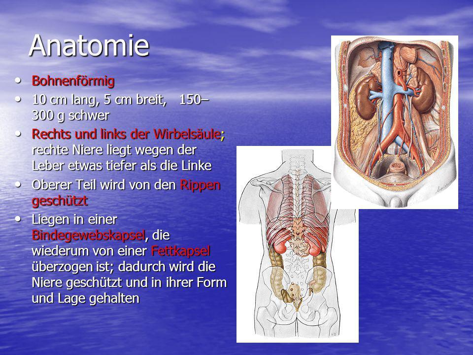 Niere. - ppt video online herunterladen