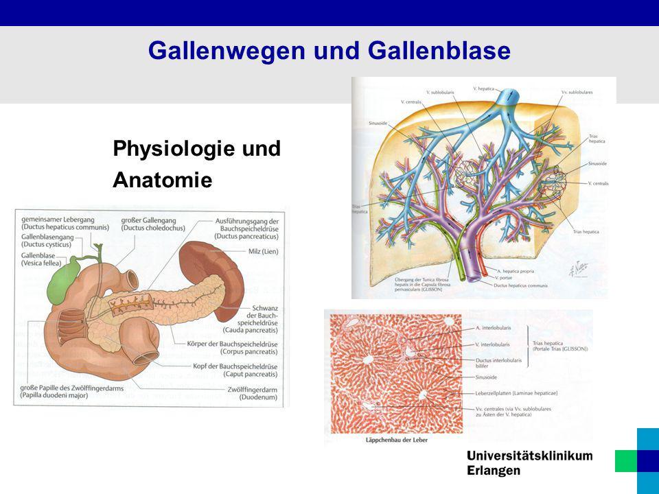 Niedlich Pankreas Leber Und Gallenblase Galerie - Menschliche ...