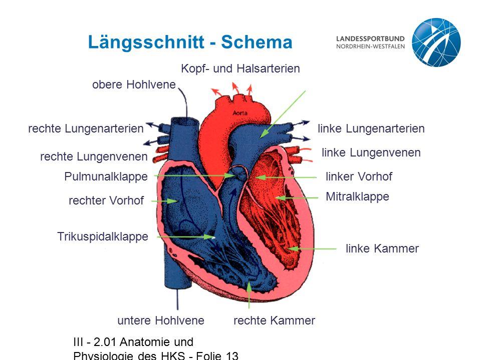 Großzügig Anatomie Der Oberen Hohlvene Bilder - Anatomie Von ...