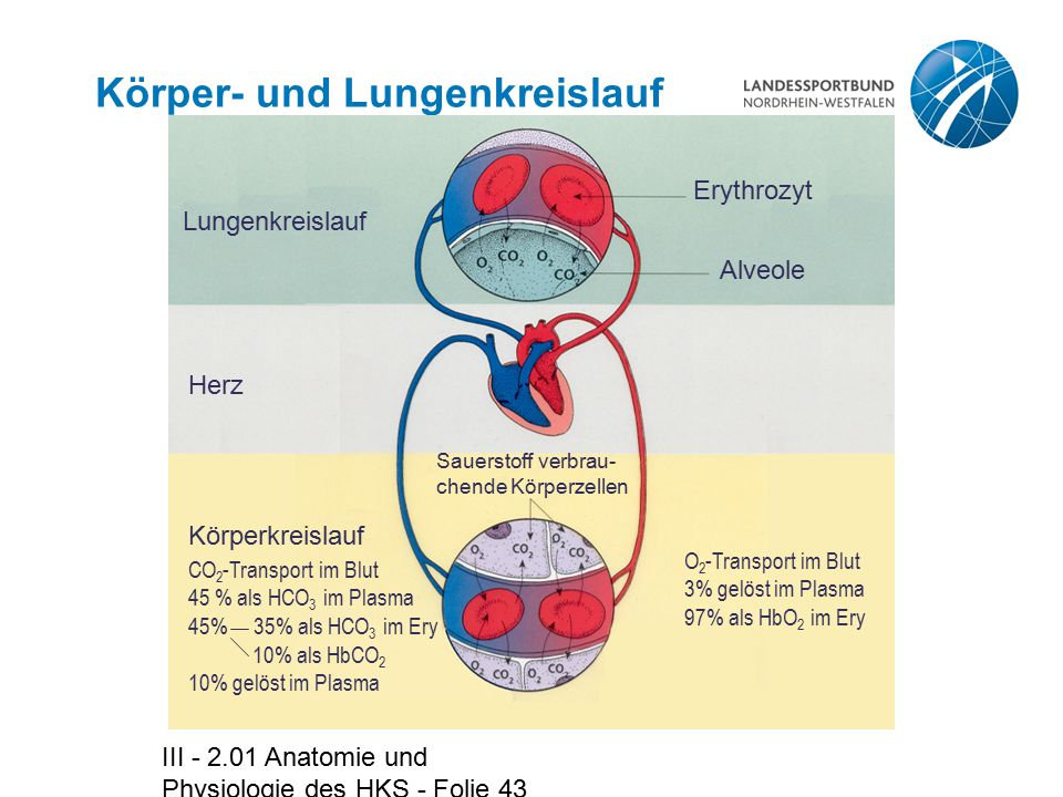 Anatomie und Physiologie des Herz-Kreislauf-Systems - ppt video ...