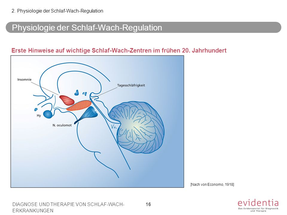 Physiologie der Schlaf-Wach-Regulation
