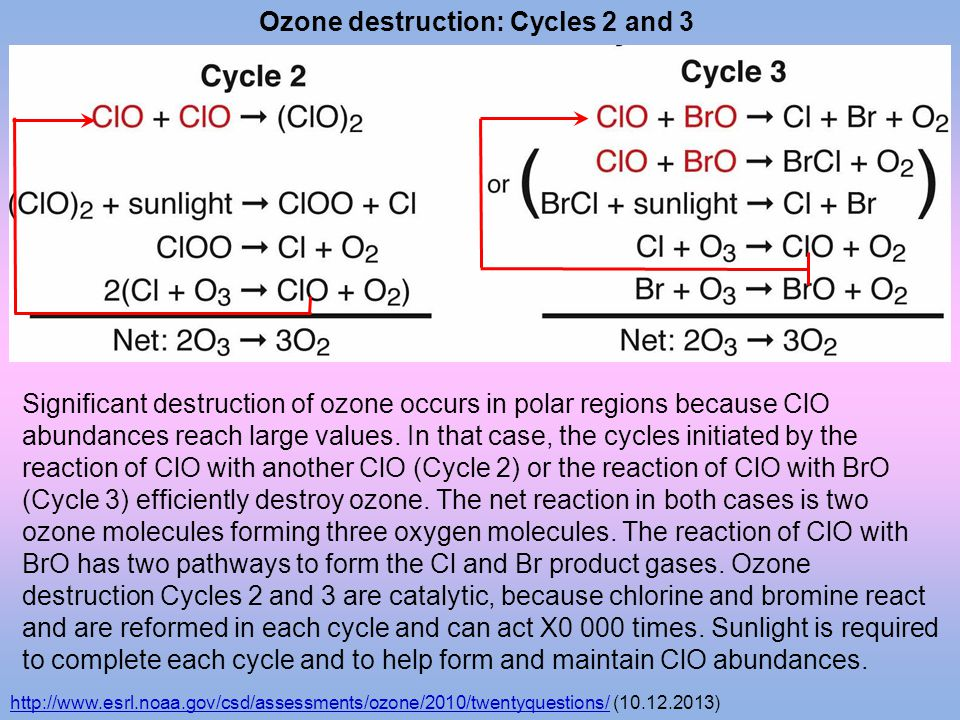 Ozone destruction: Cycles 2 and 3