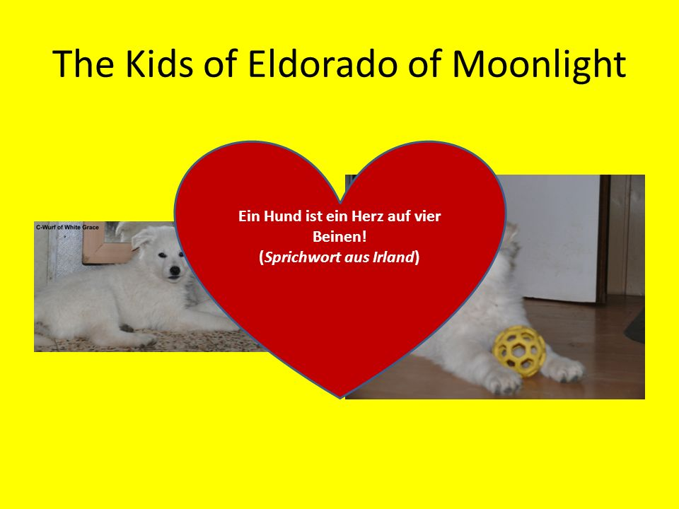 The Kids of Eldorado of Moonlight