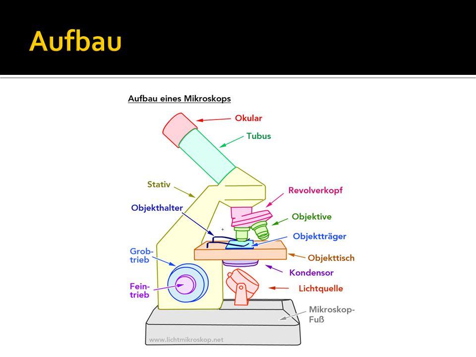 mikroskop aufbau arbeitsblatt