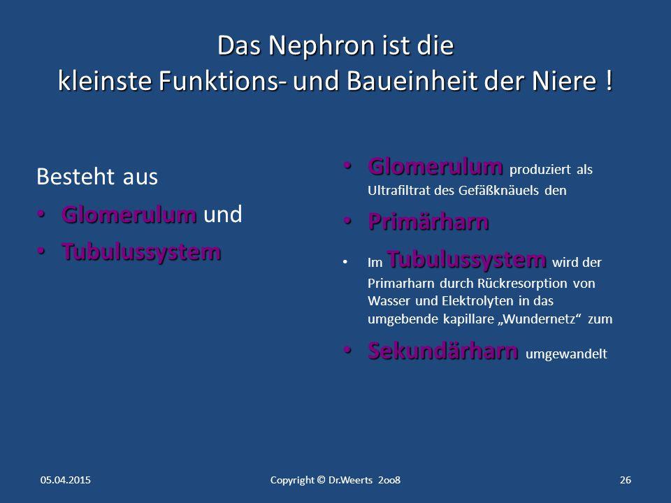 Anatomie - Niere und ableitende Harnwege - - ppt herunterladen