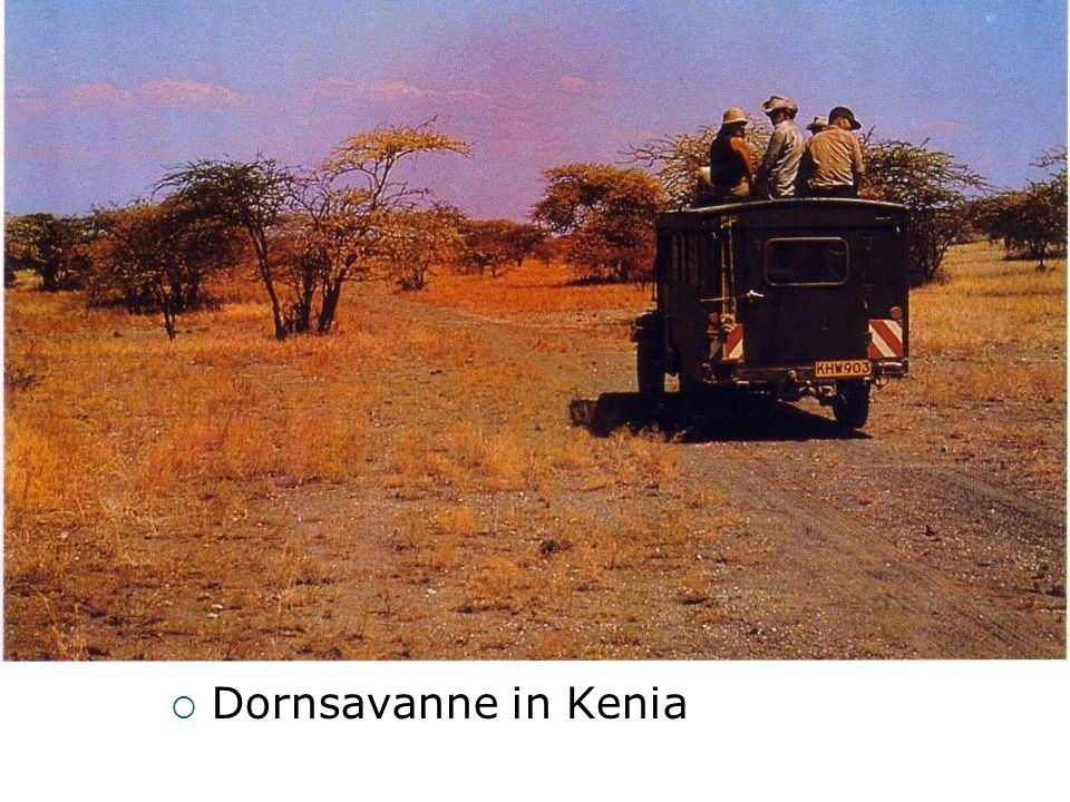 Dornsavanne in Kenia