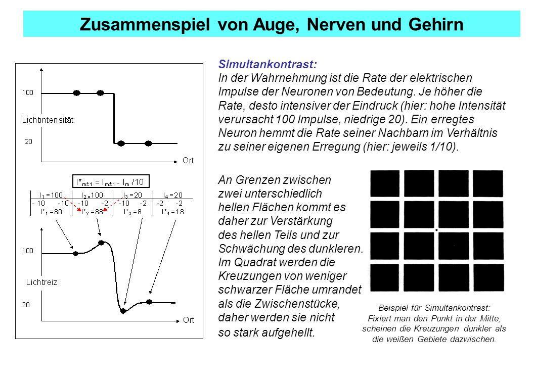 Ausgezeichnet Nerven Im Auge Ideen - Physiologie Von Menschlichen ...