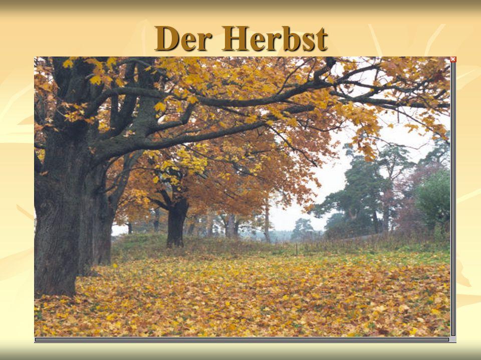 Herbst-Bluss-Bluschenjob