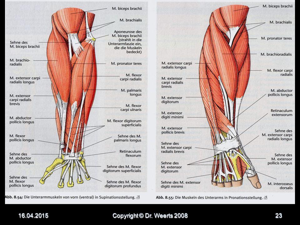 Erfreut Schulterblatt Anatomie Muskeln Galerie - Anatomie Ideen ...