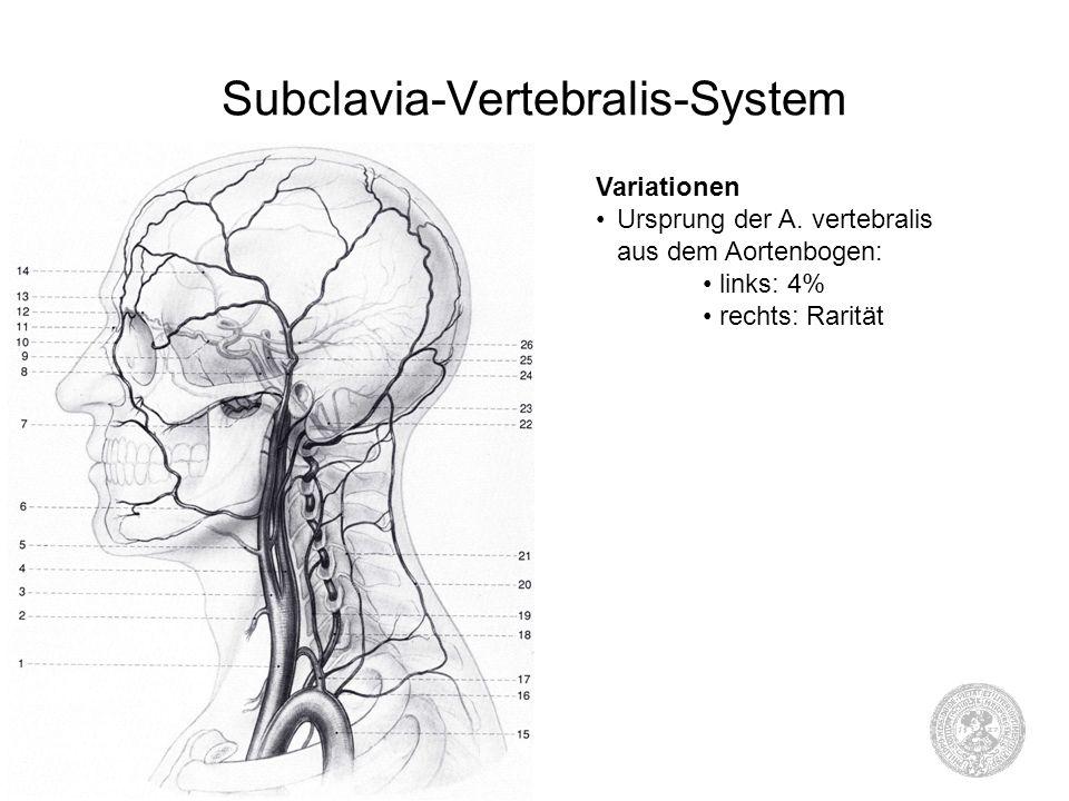 Fein Anatomie Der Aortenbogen Fotos - Anatomie Ideen - finotti.info