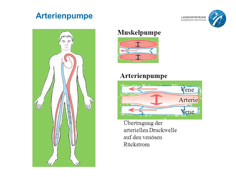 Ungewöhnlich Anatomie Der Herzarterien Ideen - Anatomie Ideen ...