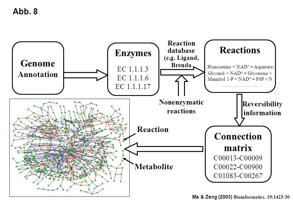 Genome Enzymes Connection matrix Reactions