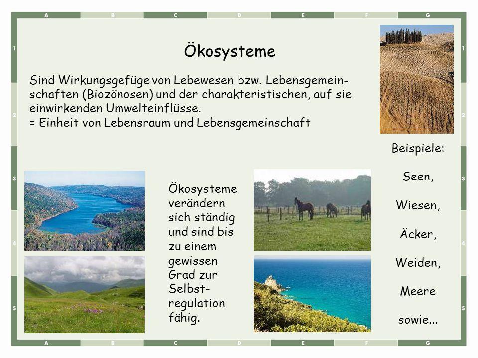 Aquatische Okosysteme Online Lernen Auf Abiweb De