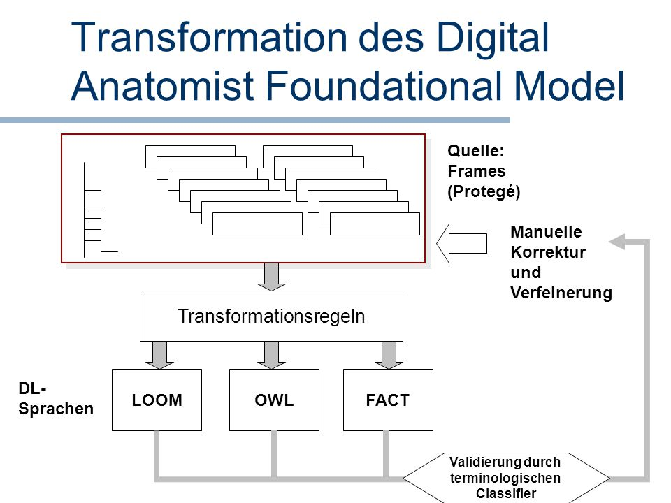Transformation des Digital Anatomist Foundational Model