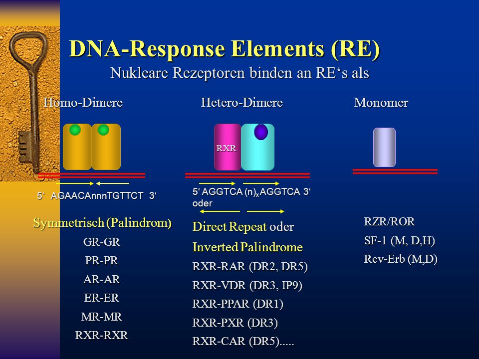 DNA-Response Elements (RE)