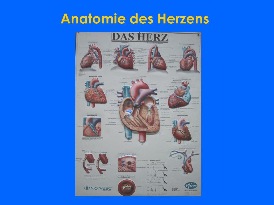 Dr.Alexander Parizek Facharzt für Unfallchirurgie Sportarzt - ppt ...