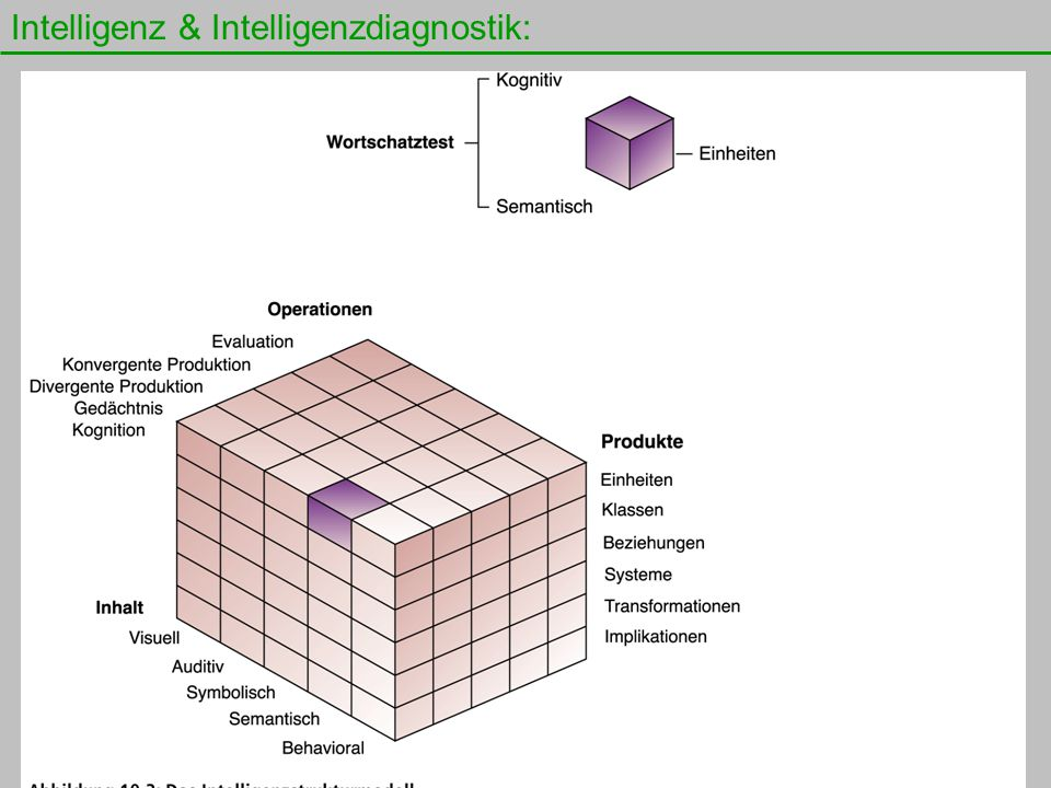Intelligenz & Intelligenzdiagnostik: