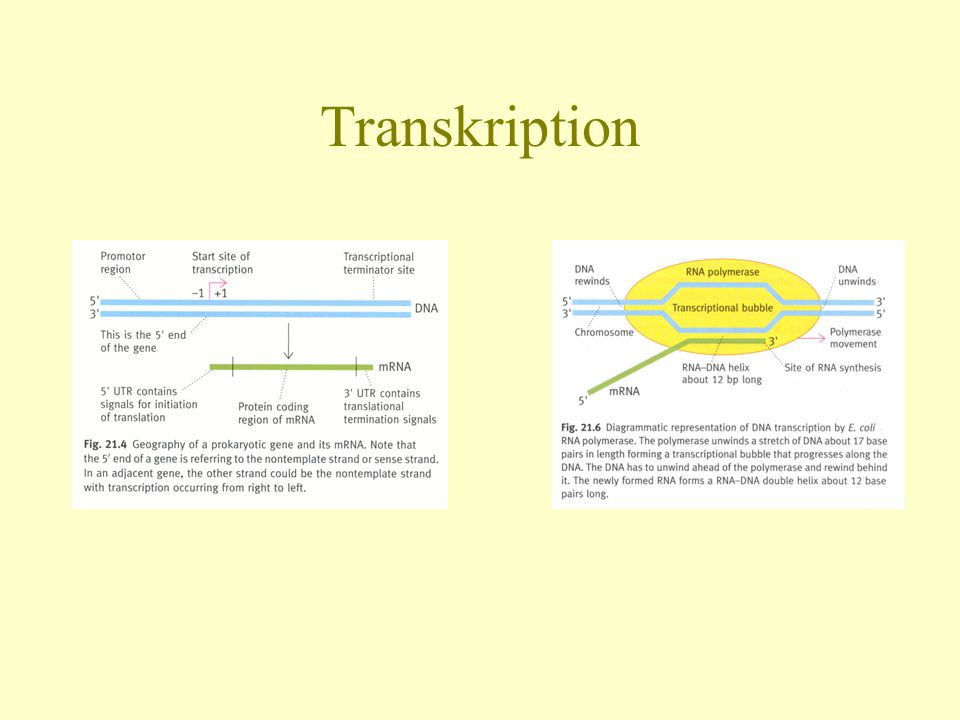 Transkription