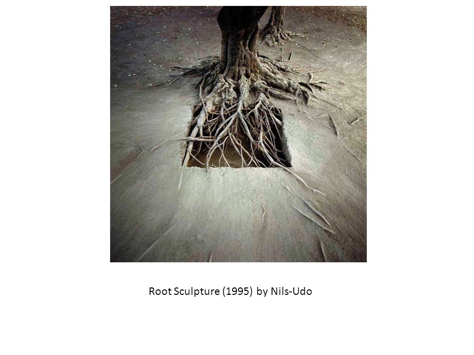 Root Sculpture (1995) by Nils-Udo