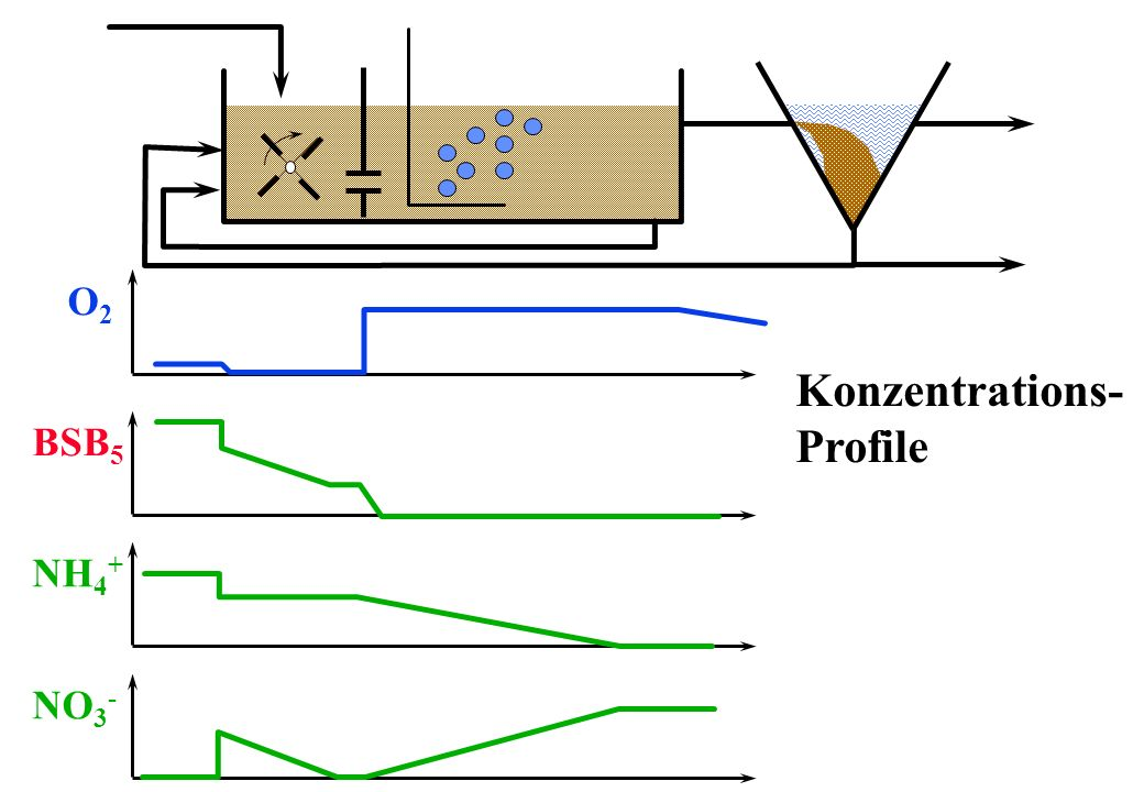 O2 Konzentrations- Profile BSB5 NH4+ NO3-