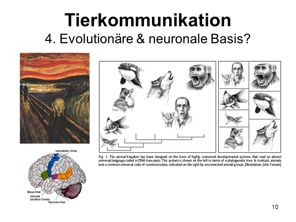 Tierkommunikation 4. Evolutionäre & neuronale Basis