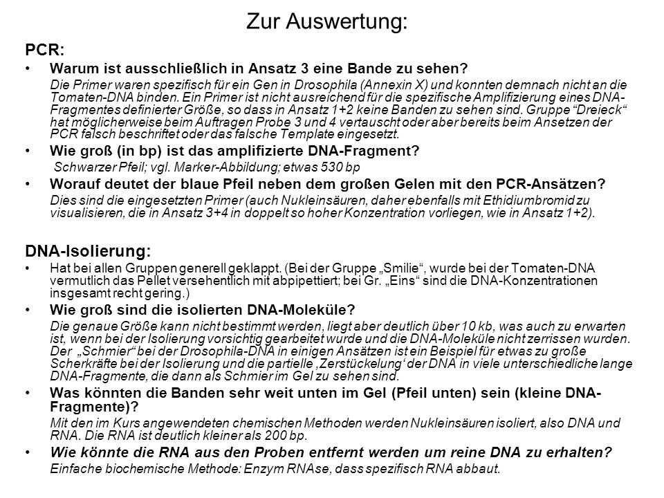 Zur Auswertung: PCR: DNA-Isolierung: