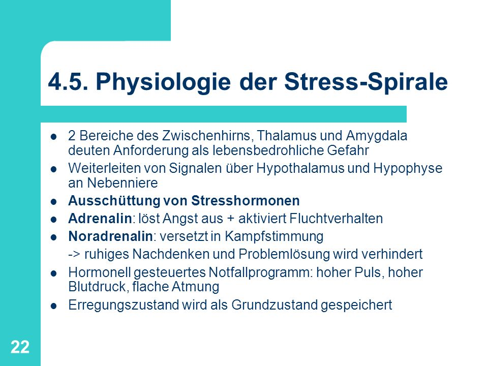 4.5. Physiologie der Stress-Spirale