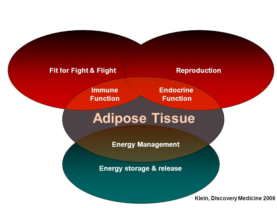 Energy storage & release Klein, Discovery Medicine 2006