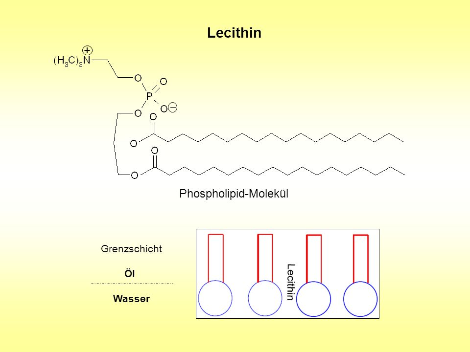 Lecithin + Phospholipid-Molekül