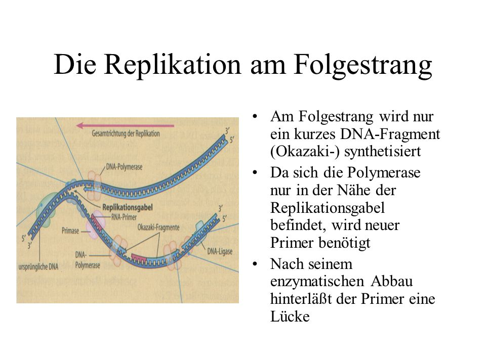 Die Replikation am Folgestrang