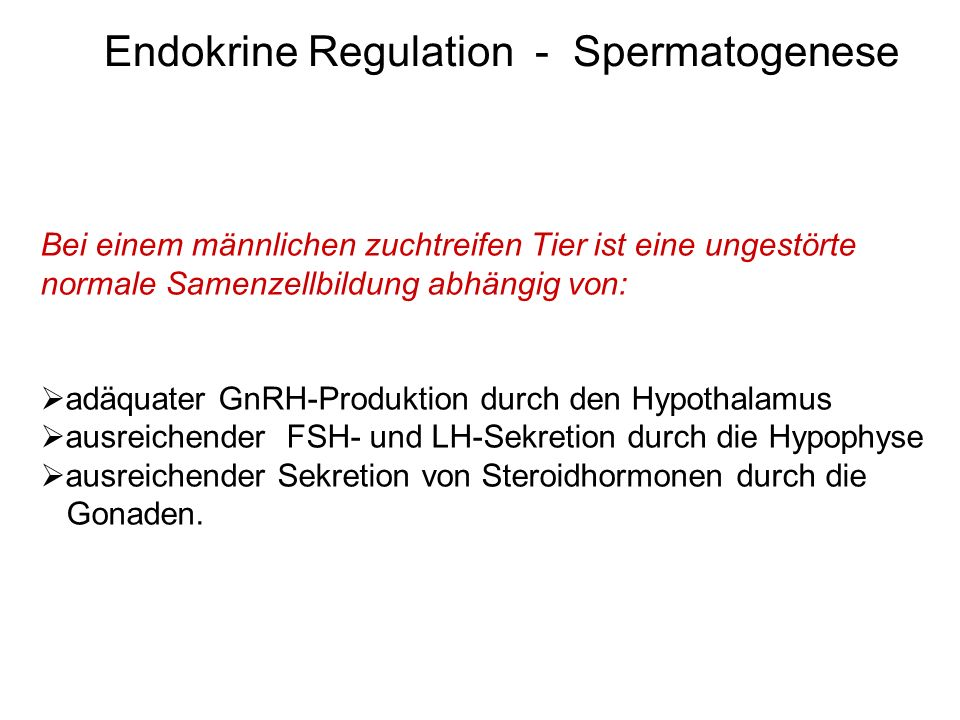 Endokrine Regulation - Spermatogenese