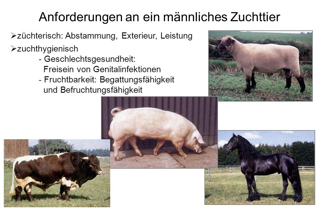 Andrologische Untersuchung bei landwirtschaftlichen Nutztieren - ppt ...