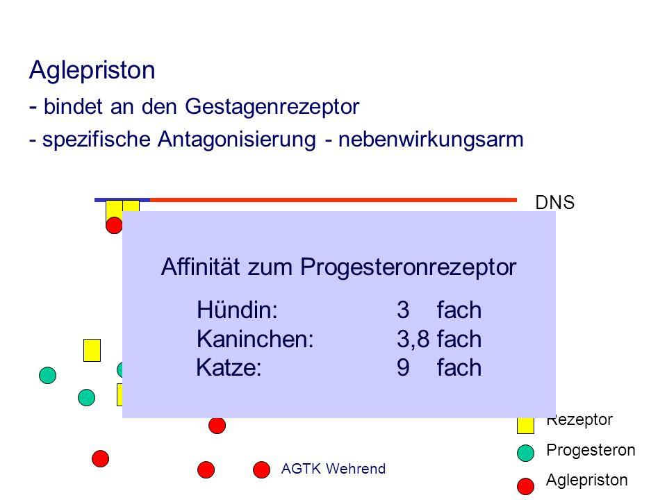 Aglepriston - bindet an den Gestagenrezeptor