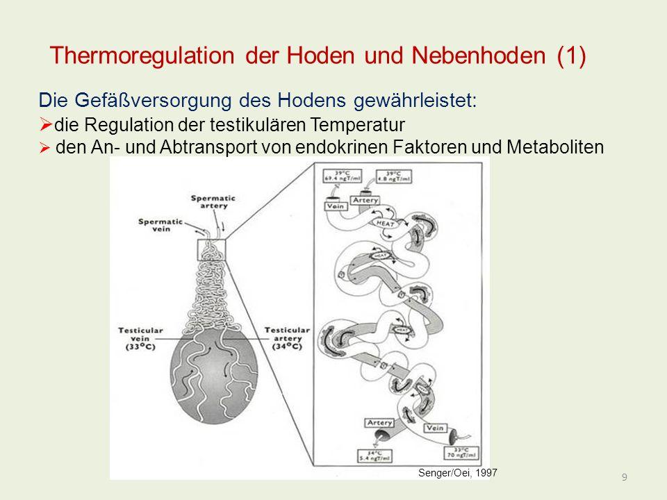Andrologie und künstliche Besamung - ppt video online herunterladen