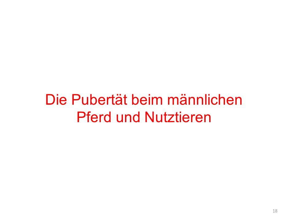 Untermodul a Andrologie und KB 6. Semester (Sommersemester) ppt ...