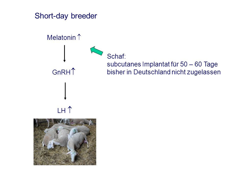 Short-day breeder Melatonin 